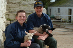 Lambing Live at Smeale Farm